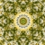 Flower Field Starlish Kaleidoscope Loopable Video Background