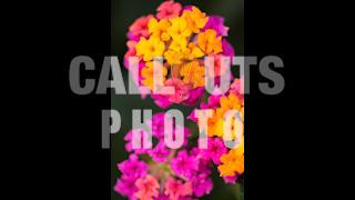 Yellow Pink Flowers Closeup Flower Garden