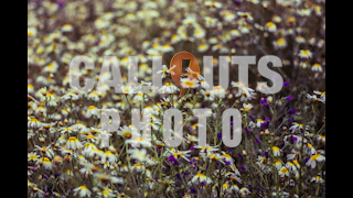 Field with Daisys and Pruple Flowers