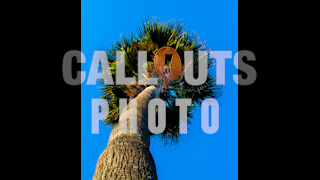 Palm Tree from Low Angle