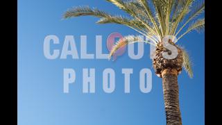 Palm Tree Blue Sky Text Space
