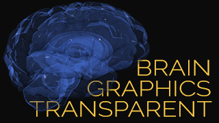 Transparent Brain Illustrations