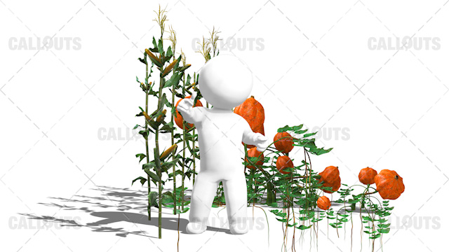 3D Guy Standing in Field of Corns and Pumpkin Plants White Background