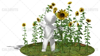 3D Guy Standing in Field of Sunflower Plants White Background