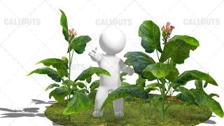 3D Guy Standing in Field of Tobacco Plants White Background