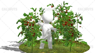3D Guy Standing in Field of Tomato Plants White Background