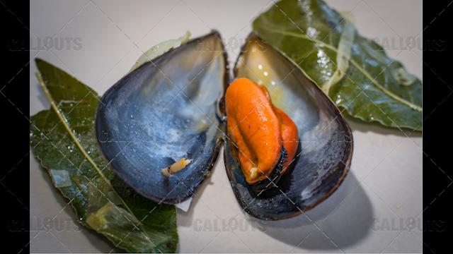 Open Mussel Forming Heart
