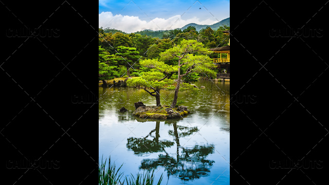 River Tree by the Golden Palace, Japan