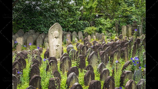 Japanese temple headstones among flowers