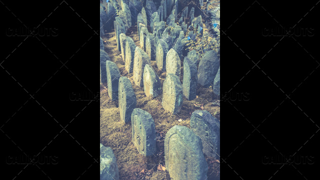 Japanese temple headstones and blue flowers