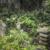Japanese temple headstones in garden