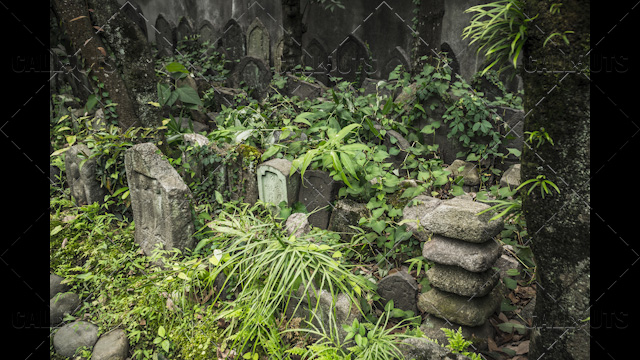 Japanese temple headstones in garden
