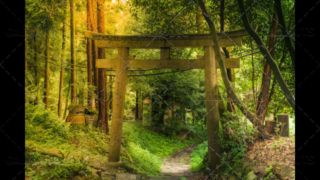 Fushimi Inari-taisha shrine, pillars in magical forest. Kyoto, Japan.