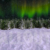 Winter Wonderland Aurora Pan Right with Snow Animation