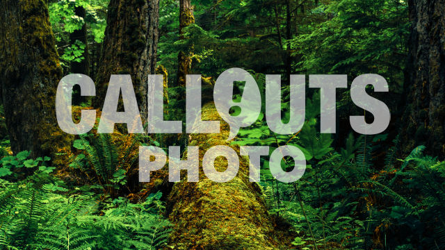 Fallen Douglas Fir tree with moss, Cathedral Grove