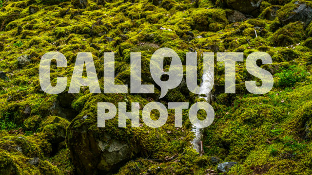Moss covered stones in magical forest 02